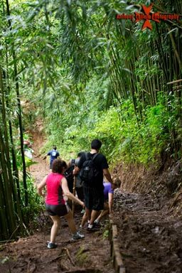 Hikers on the trail, working their way back down from the waterfalls of Manoa, through the Bamboo forest
