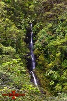 Manoa Falls Honolulu Hawaii