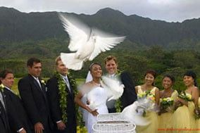 Oahu Wedding Photography Services